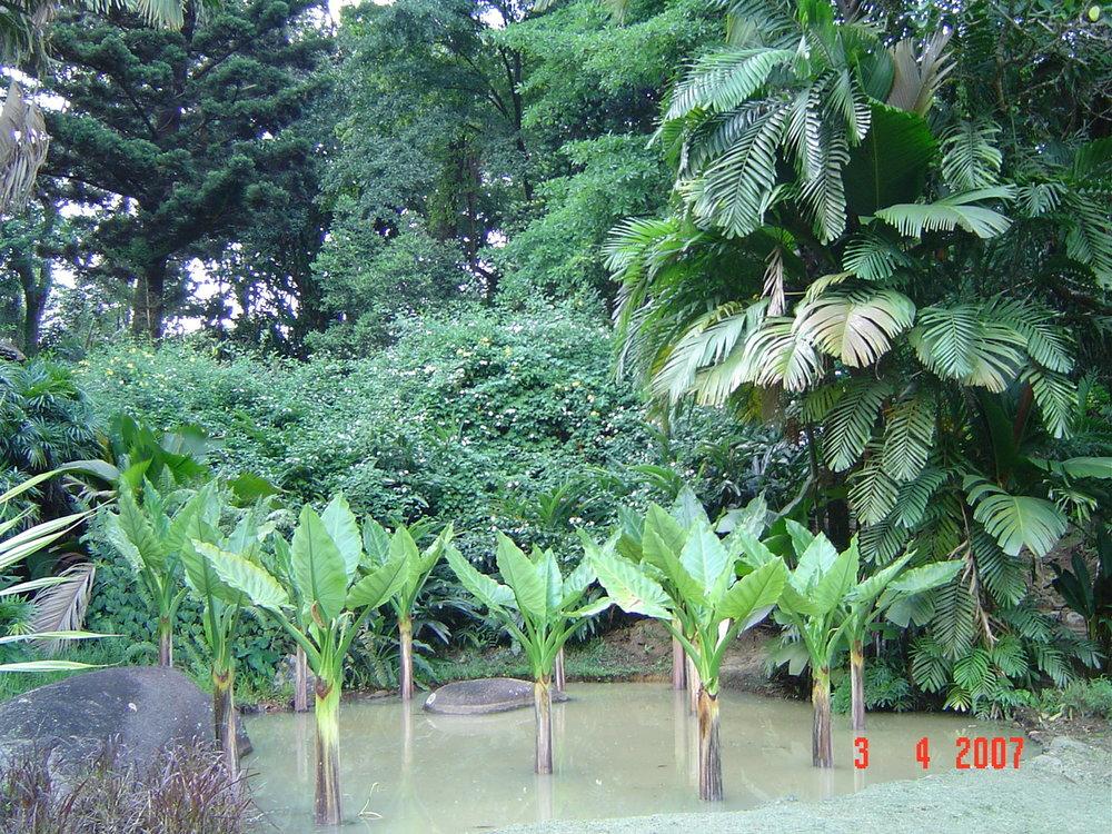 Botanical gardens Mahe