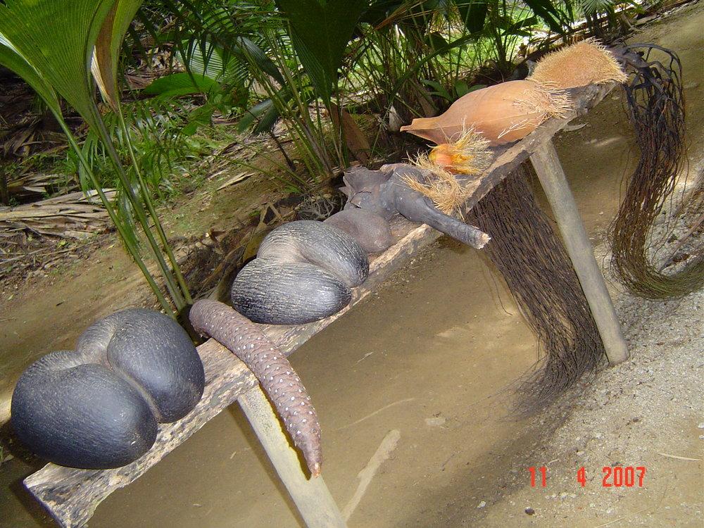 Fruits de Mer Praslin