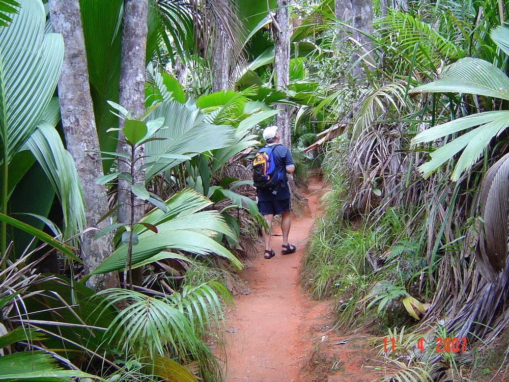 Walking through Vallee de Mai Praslin