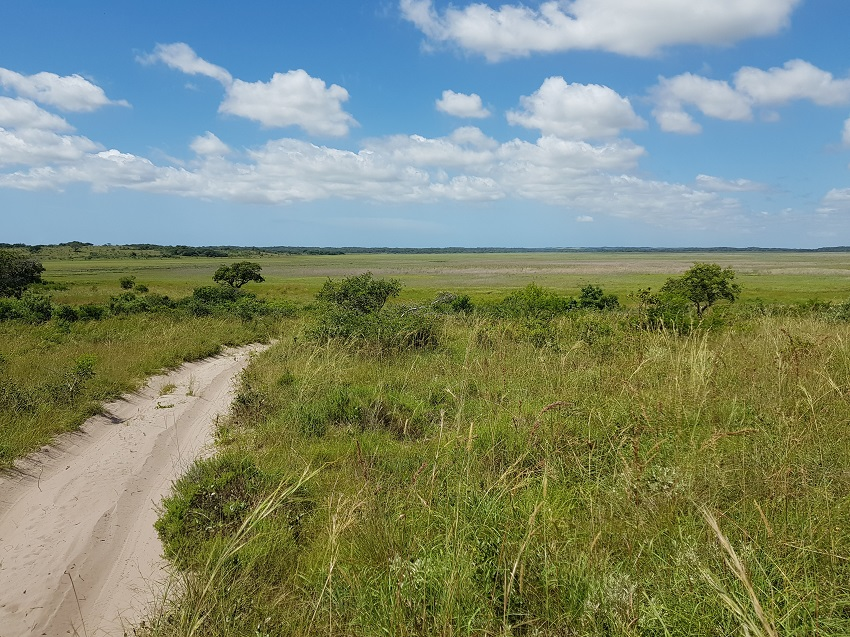 Marsh Maputo Special Reserve.jpg