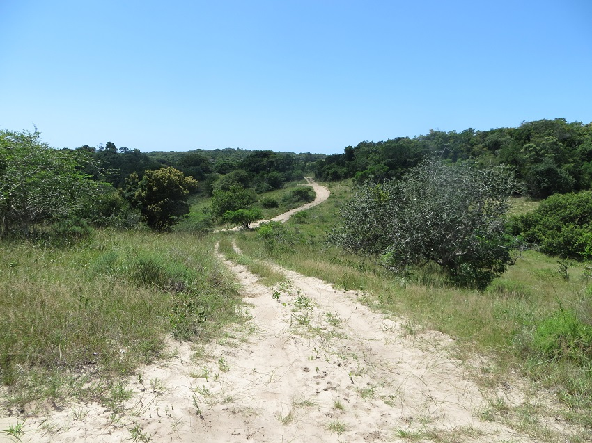 Roads through Maputo Special Reserve