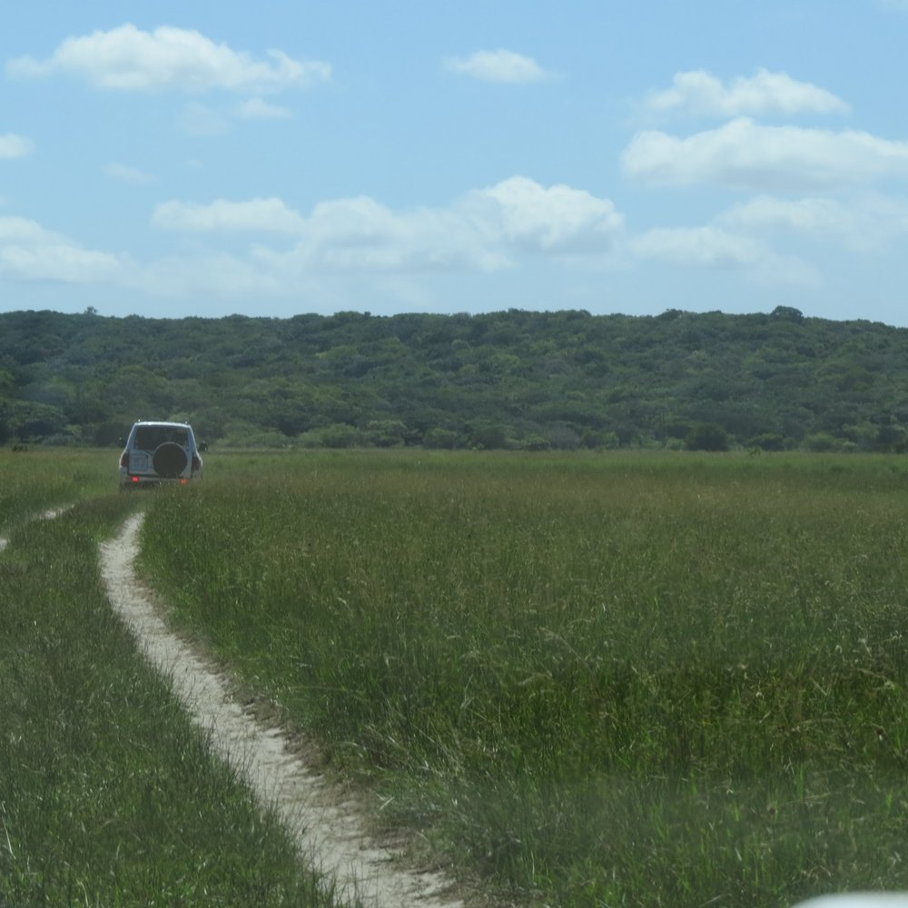 Driving through Maputo Special Reserve marshlands