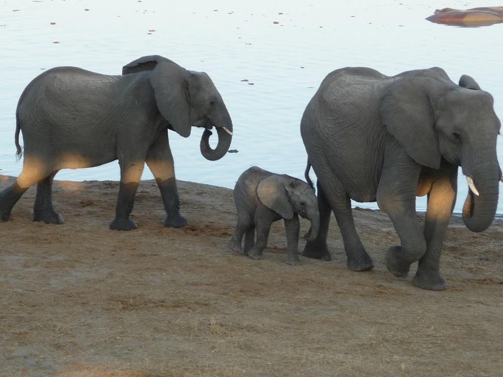 Just love elephants!