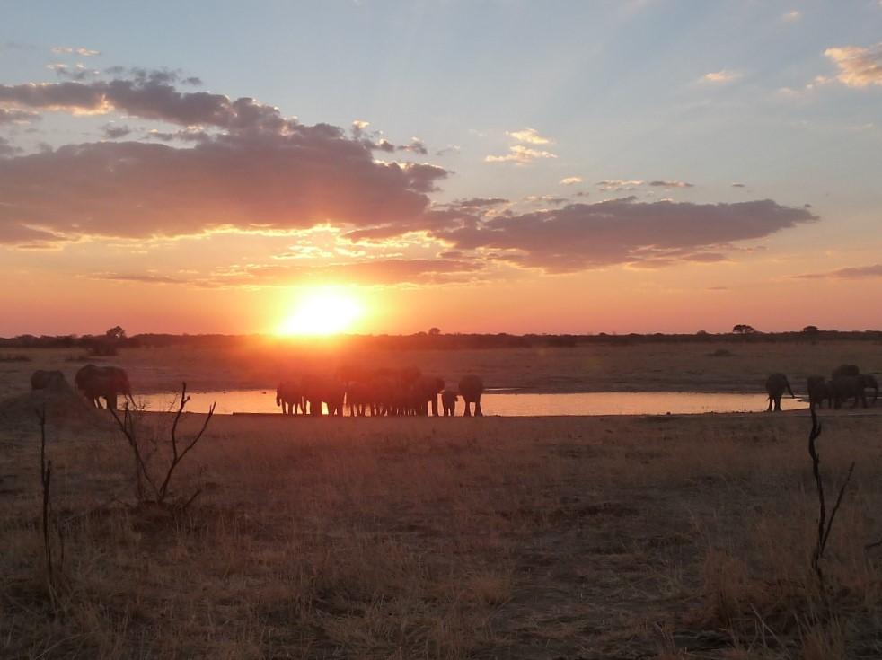 Roaming Fox Hwange elephants sunset 1.JPG