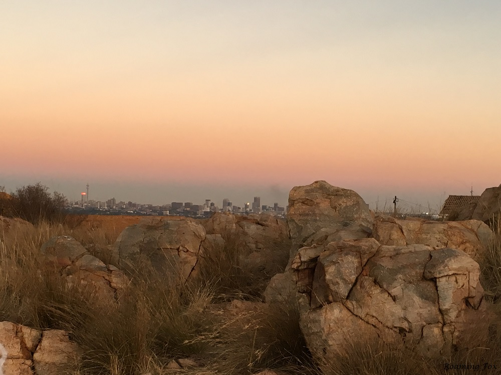 Northcliff view of Johannesburg Roaming Fox.JPG