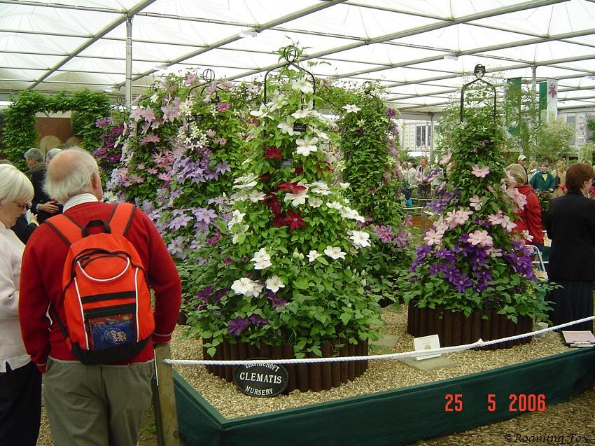 Clematis Chelsea Flower Show 2006.JPG