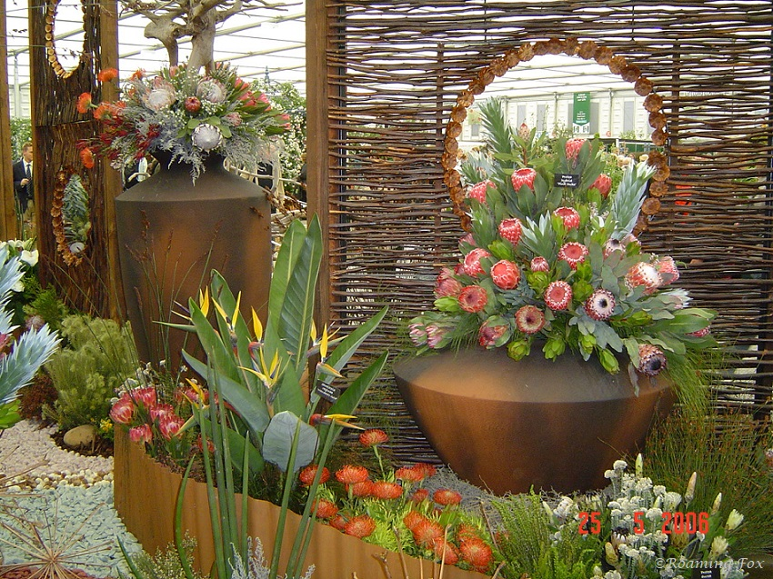 South African Botanical Garden display Chelsea Flower show 2006.JPG