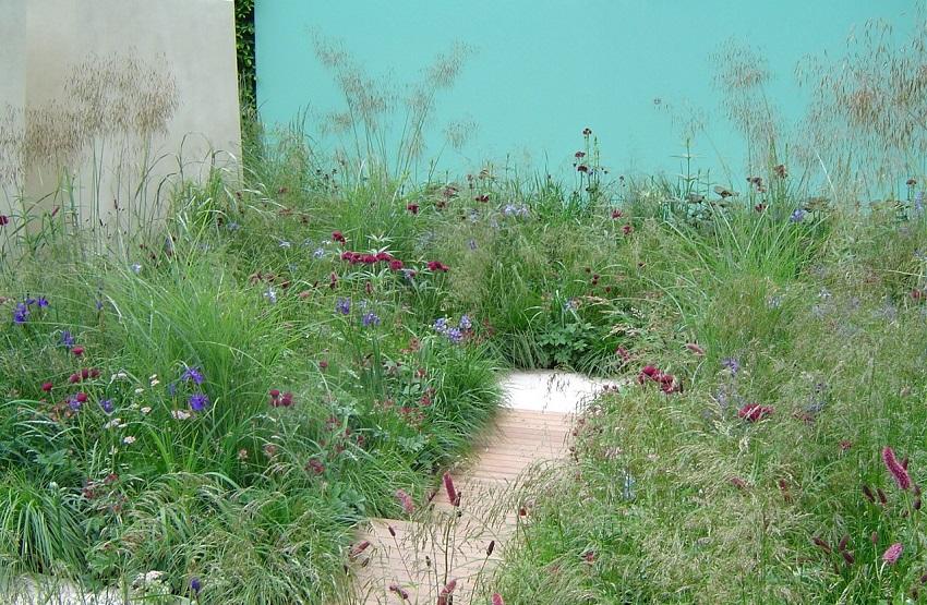 Wildflowers & grasses -