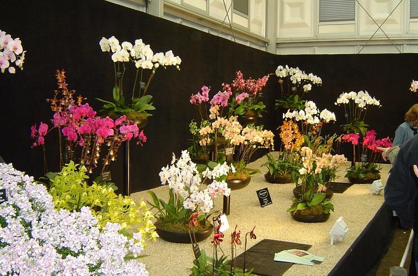 Orchid exhibition Chelsea Flower Show 2006
