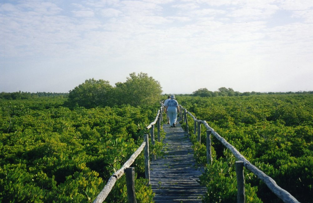 Mangrove swamps near Barra Lodge.jpg