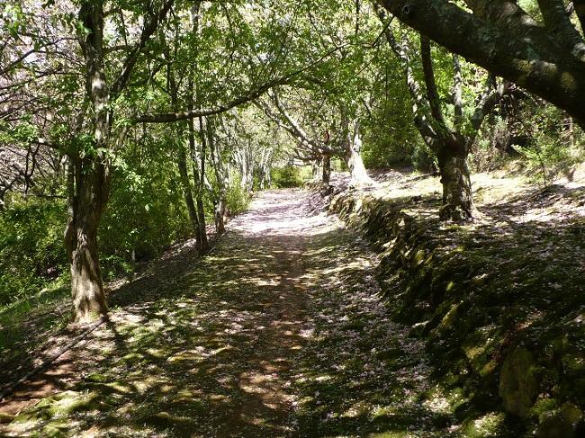Cheerio gardens 4.JPG