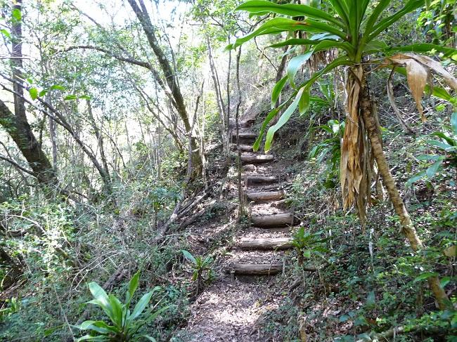 Path going uphill Magoebaskloof zipline.JPG