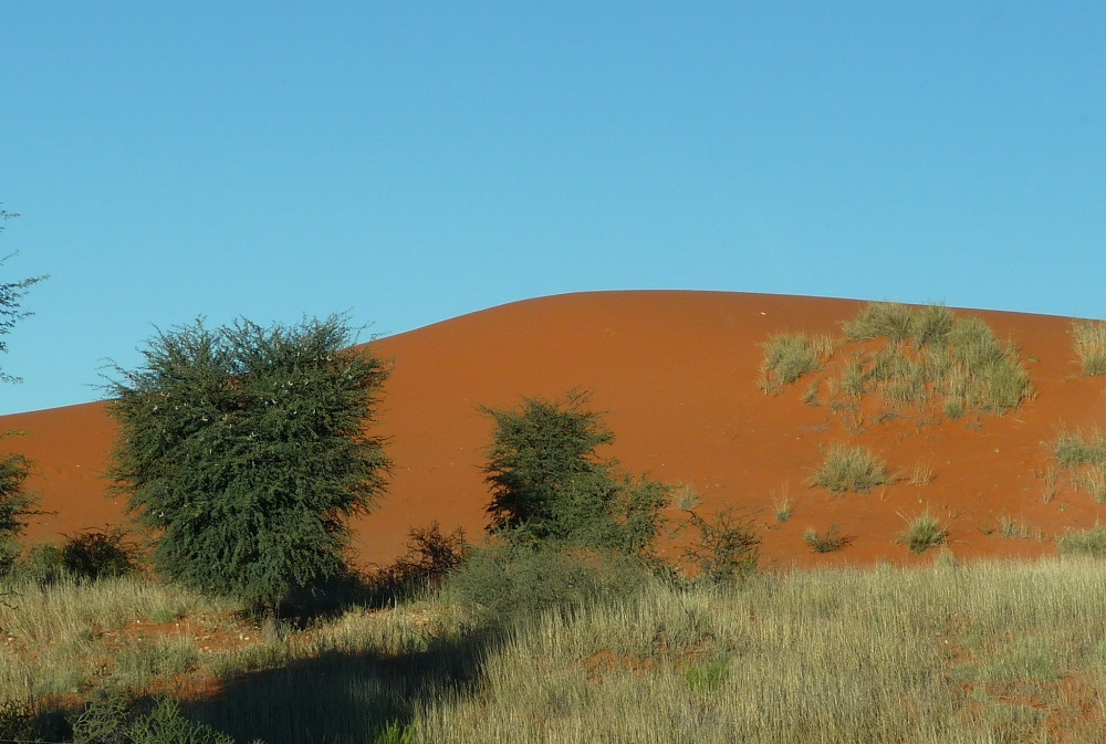 Red sands of the Kalahari