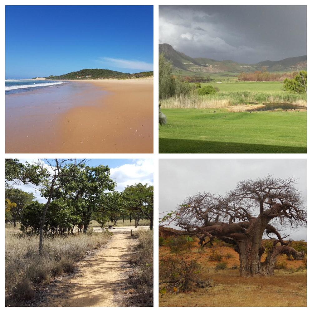 Beach, mountain, bush or forest?