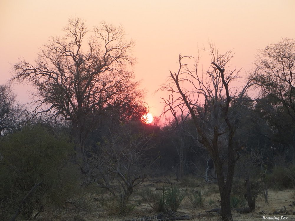 Sunset in the Bushveld, South Africa
