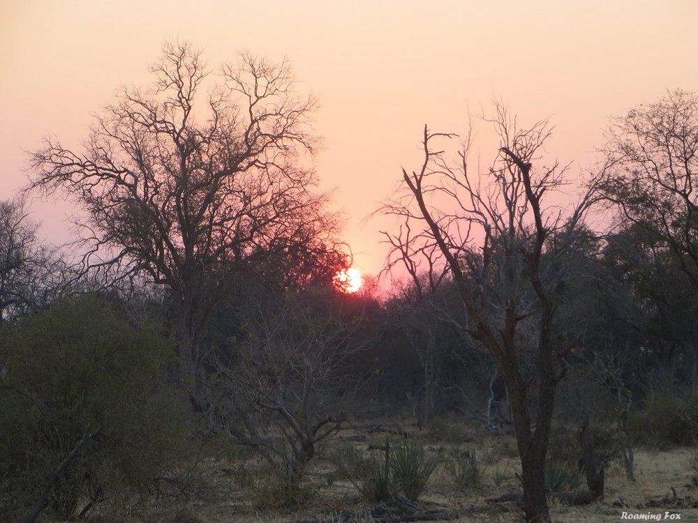 African sunset bushveld.JPG