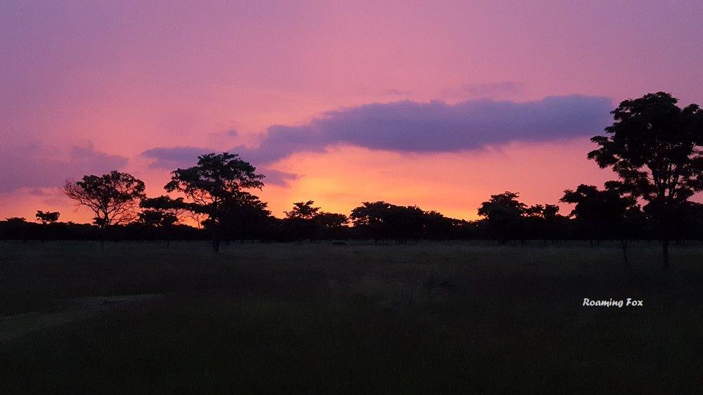 Sunset bushveld Waterberg Limpopo South Africa.jpg