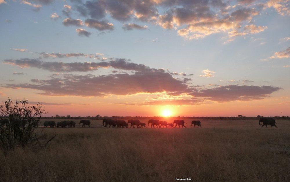Sunset elephants Hwange Zimbabwe.JPG