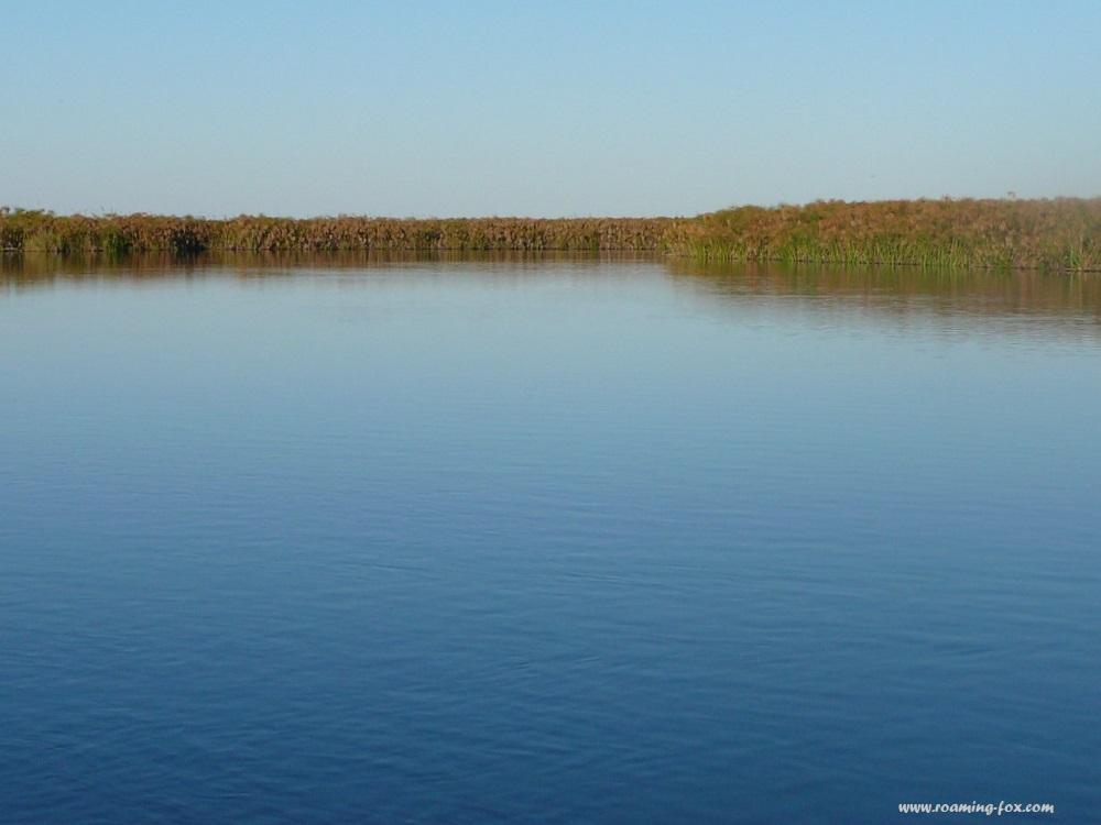 Papyrus islands in the Okavango Delta