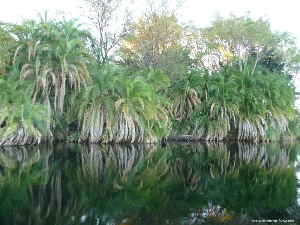 Like a tropical oasis in the Okavango Delta