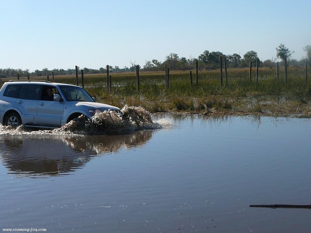Water crossing Moremi Botswana.JPG