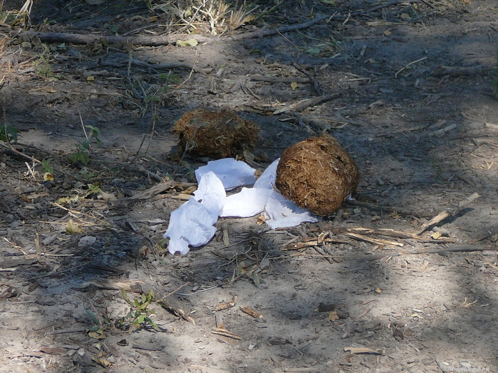 Someone's idea of a joke, putting toilet paper next to elephant poo