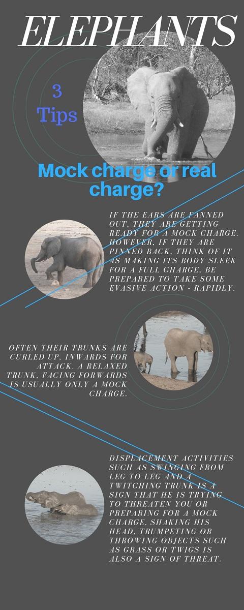 Elephants mock or real charge