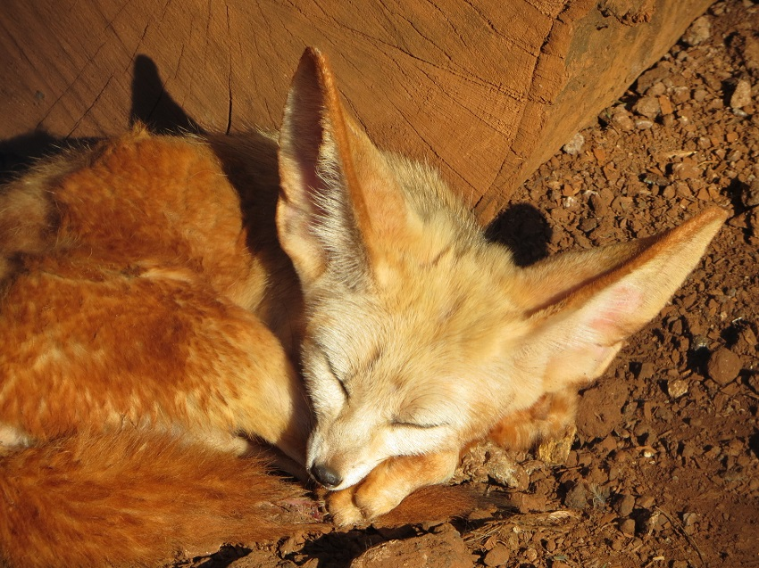 Hi, I'm Roaming Fox. - If I'm not relaxing in my den, I'm traveling and pouncing on destinations. You can read about my facts, fables and escapades as you scroll through my blog.