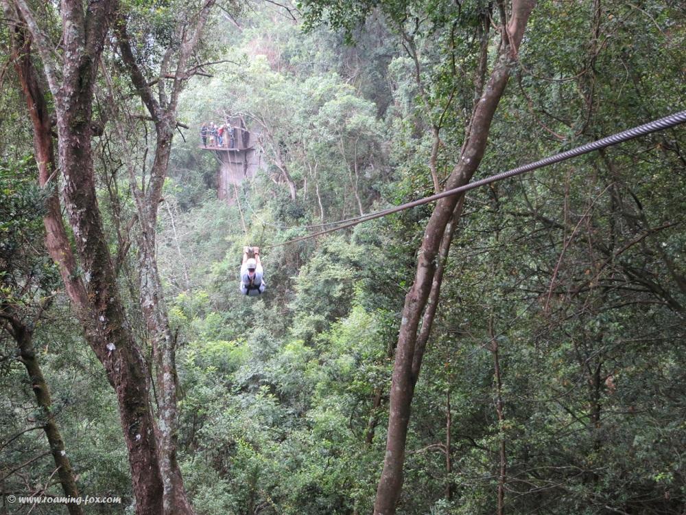 Ziplining Drakensberg Canopy Tours