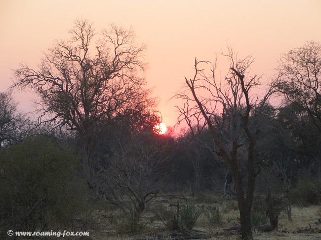 Sunset-trees-Mapungubwe.JPG
