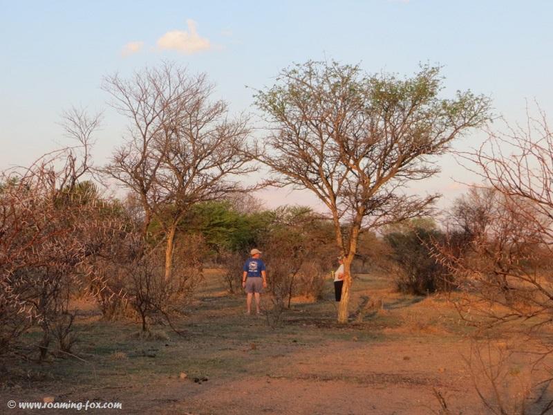 Between the bushveld trees