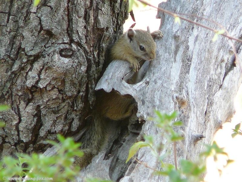 Cute but mischievous squirrel