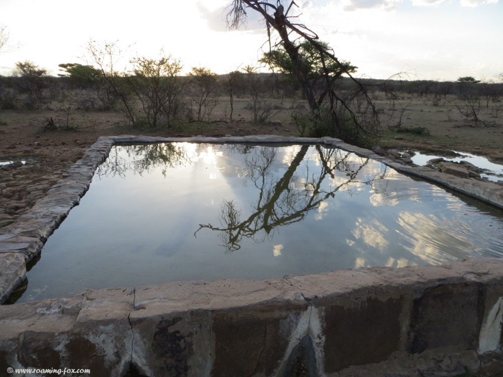 Waterhole-reflection-Waterberg.JPG