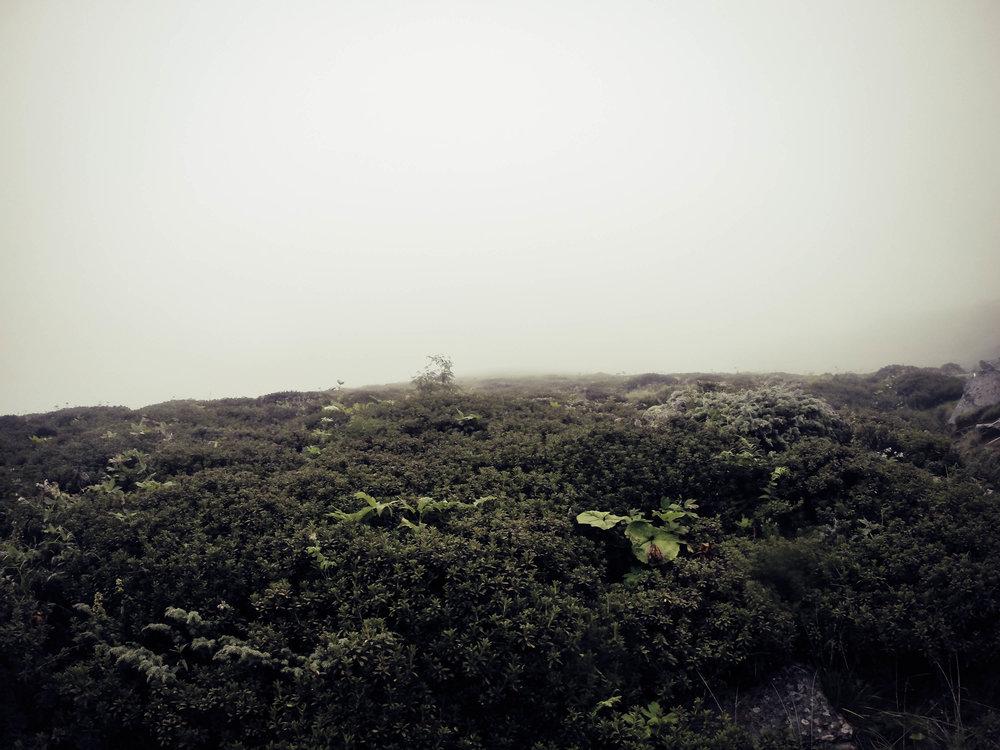 Nebel an der Olpererhütte
