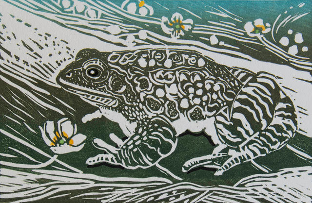 Frog linocut by Linda Richardson ( www.lindarichardson.co.uk ).