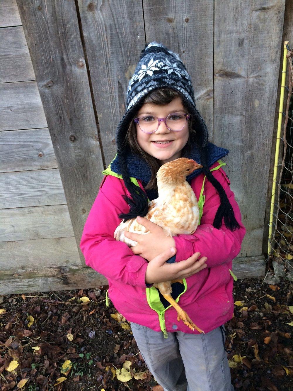 Unsere jungen Hühner sind sehr zutraulich.