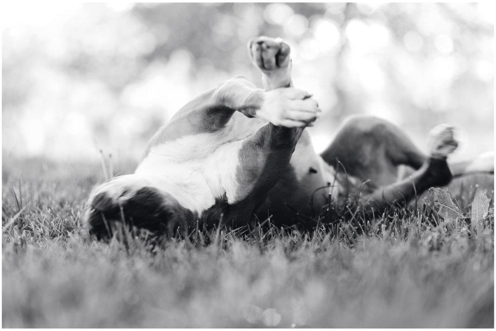 Nala-Retrato-Mascotas-Perros_Jose-Angel-Fotografia-79.jpg