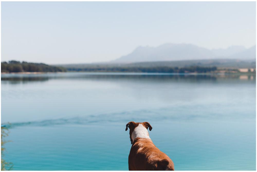 Nala-Retrato-Mascotas-Perros_Jose-Angel-Fotografia-461.jpg