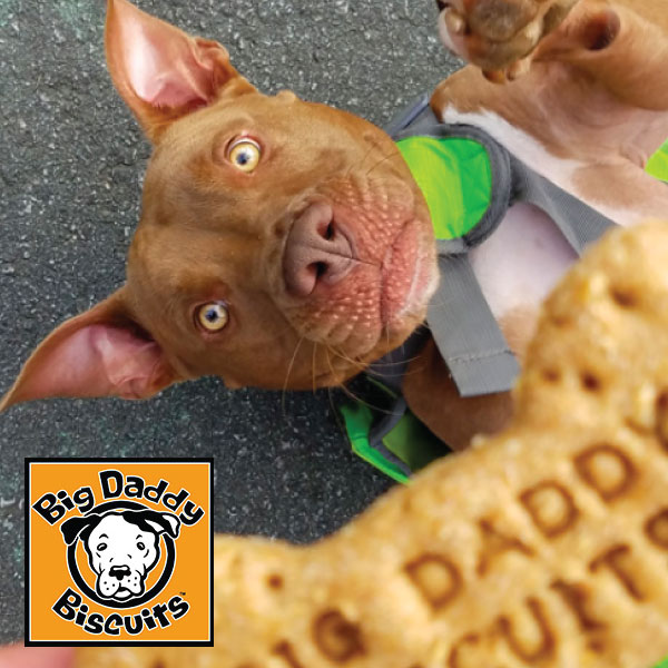 Big Daddy Biscuits  10% Off First Order #biscuits #yum #organic #treats #handmade #dog #dogfood   bigdaddybiscuits.com
