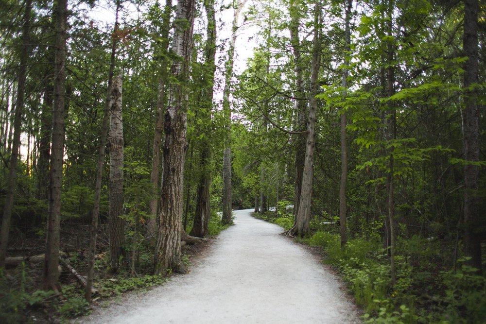 forest-path_4460x4460.jpg