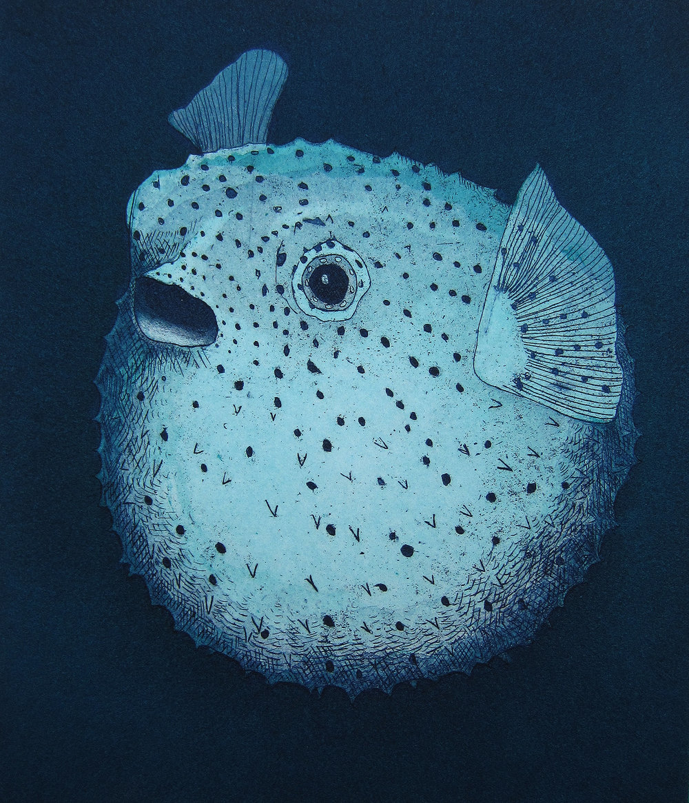 "Blowfish , two color etching with aquatint, 5"" x 6"", 2014."