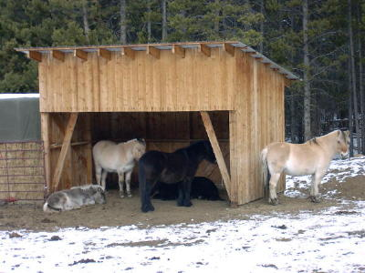 Moveable sheds have treated timber bases and metal roofs to shed snow. Board and batt siding is treated with an all-natural non-toxic stain.