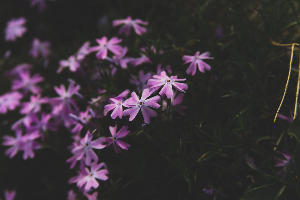 Purple Flowers Big.jpg