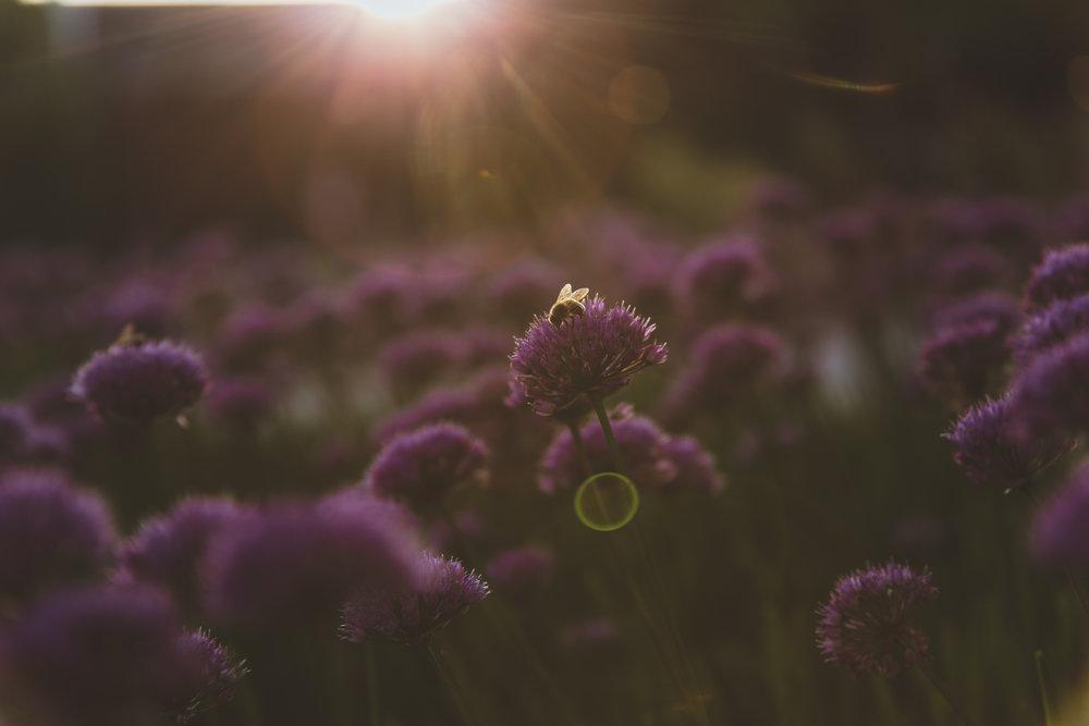 Bee N Flower 1.jpg