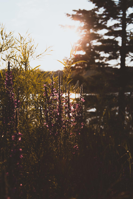 Flowers Sun.jpg