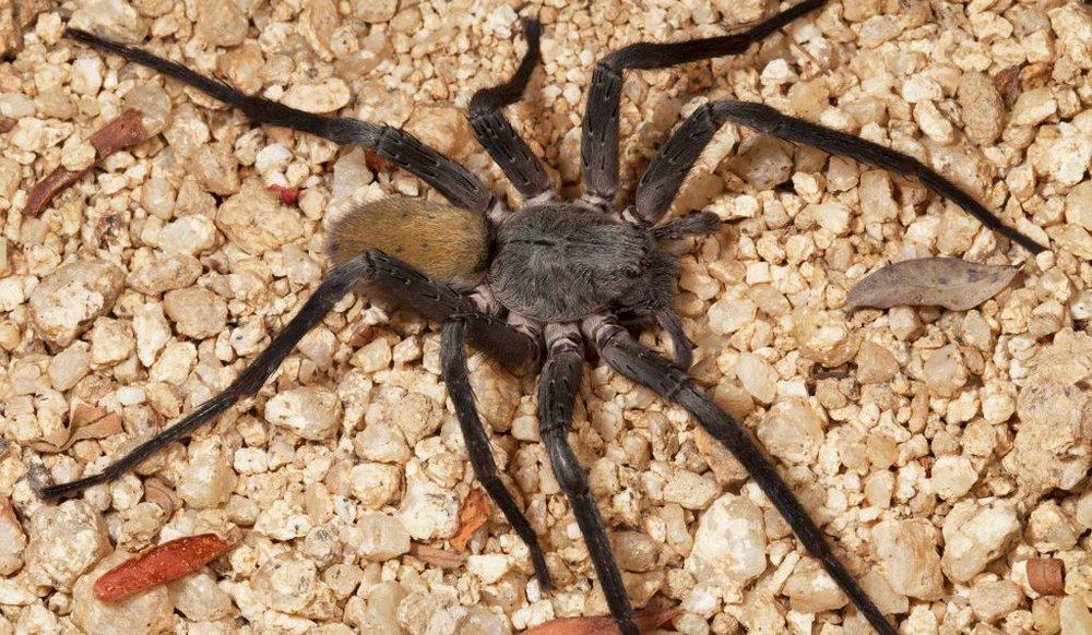 spider_2.jpg