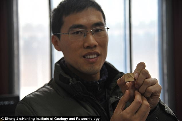 Zhao Fangchen holds one of the two fossils of the ancient species that have been discovered in Yunnan Province, China.