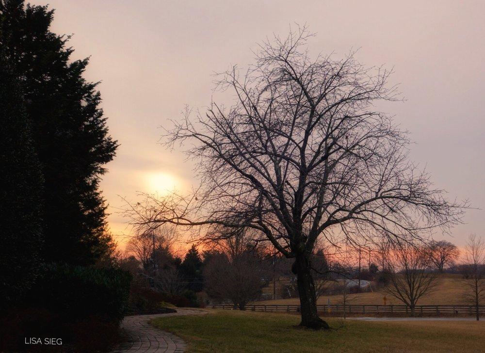 Mid-Winter Sun
