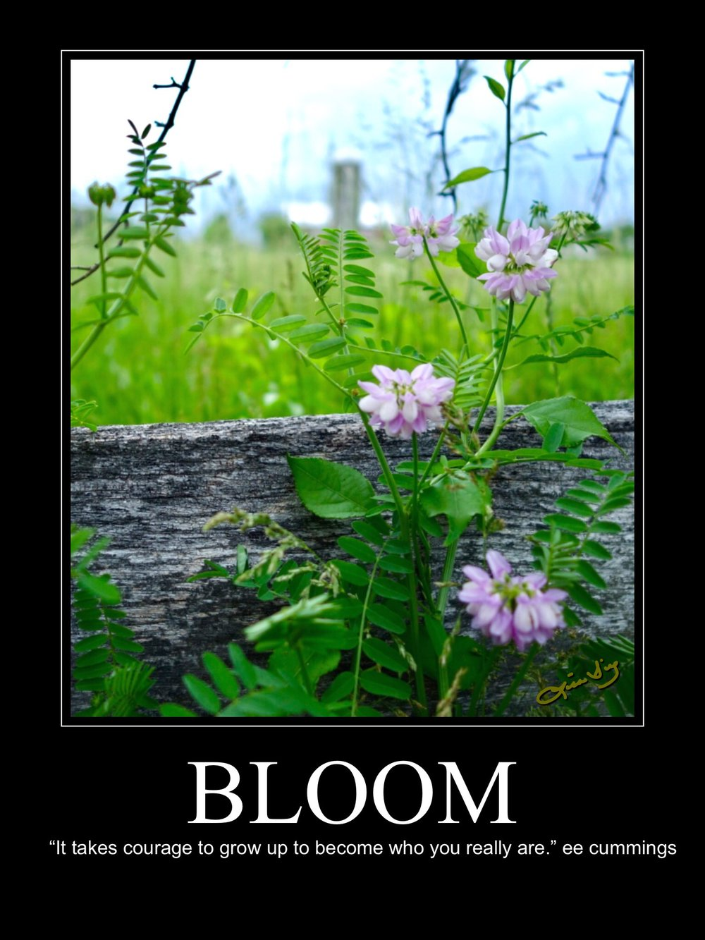 Bloom new poster.JPG