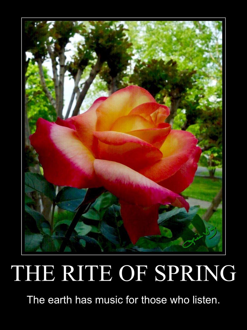 rite of spring.JPG